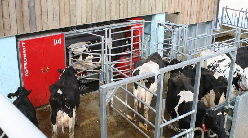 Dairy Design
